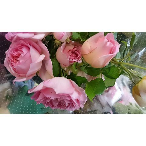 David Austin & Vintage Roses