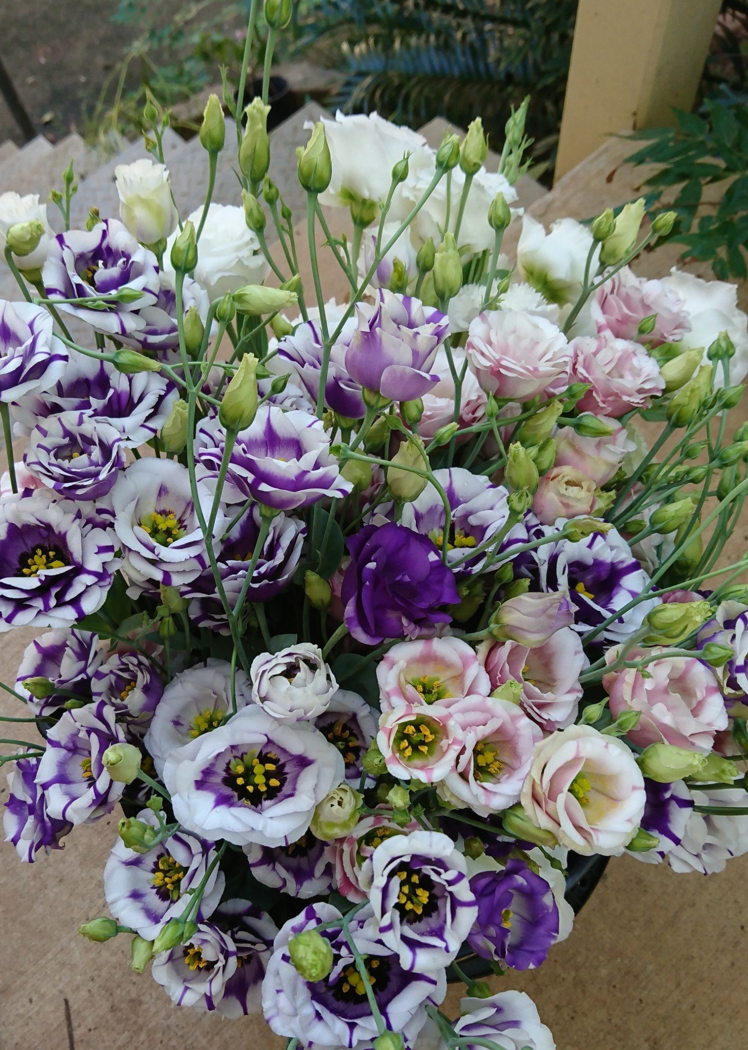 Lisianthus in season most of the year