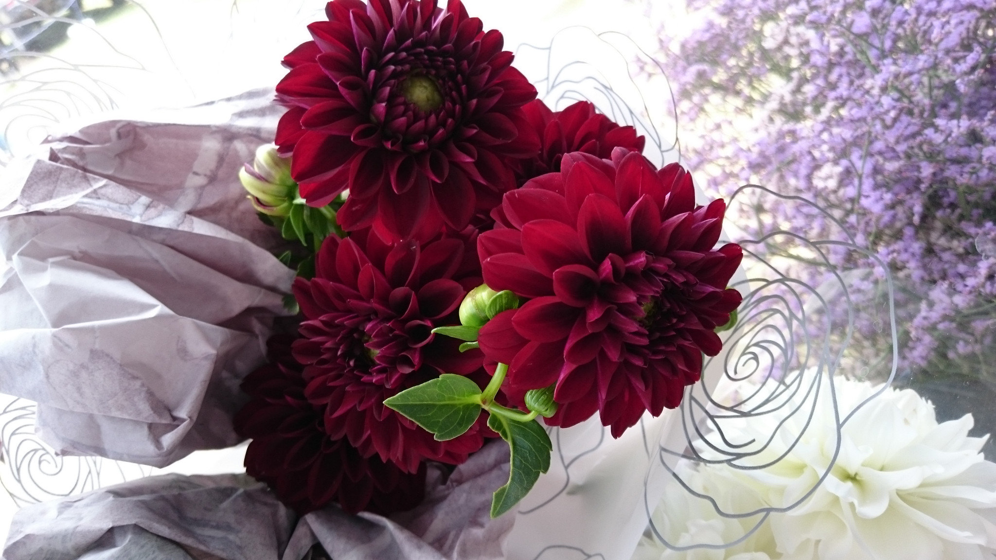Dahlia Burgundy: semi open average 8cm head