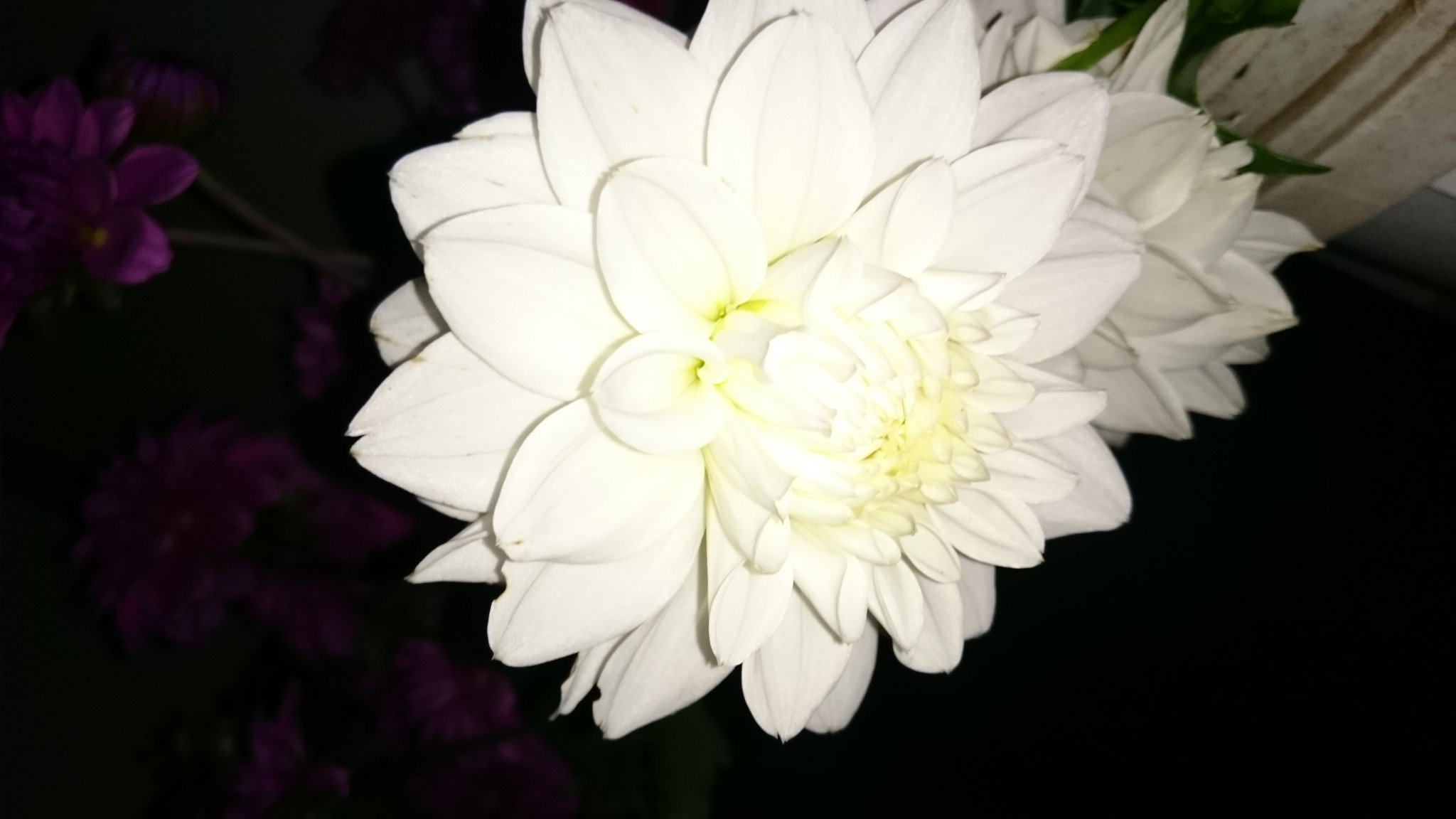 Dahlia White: semi open average 10cm head