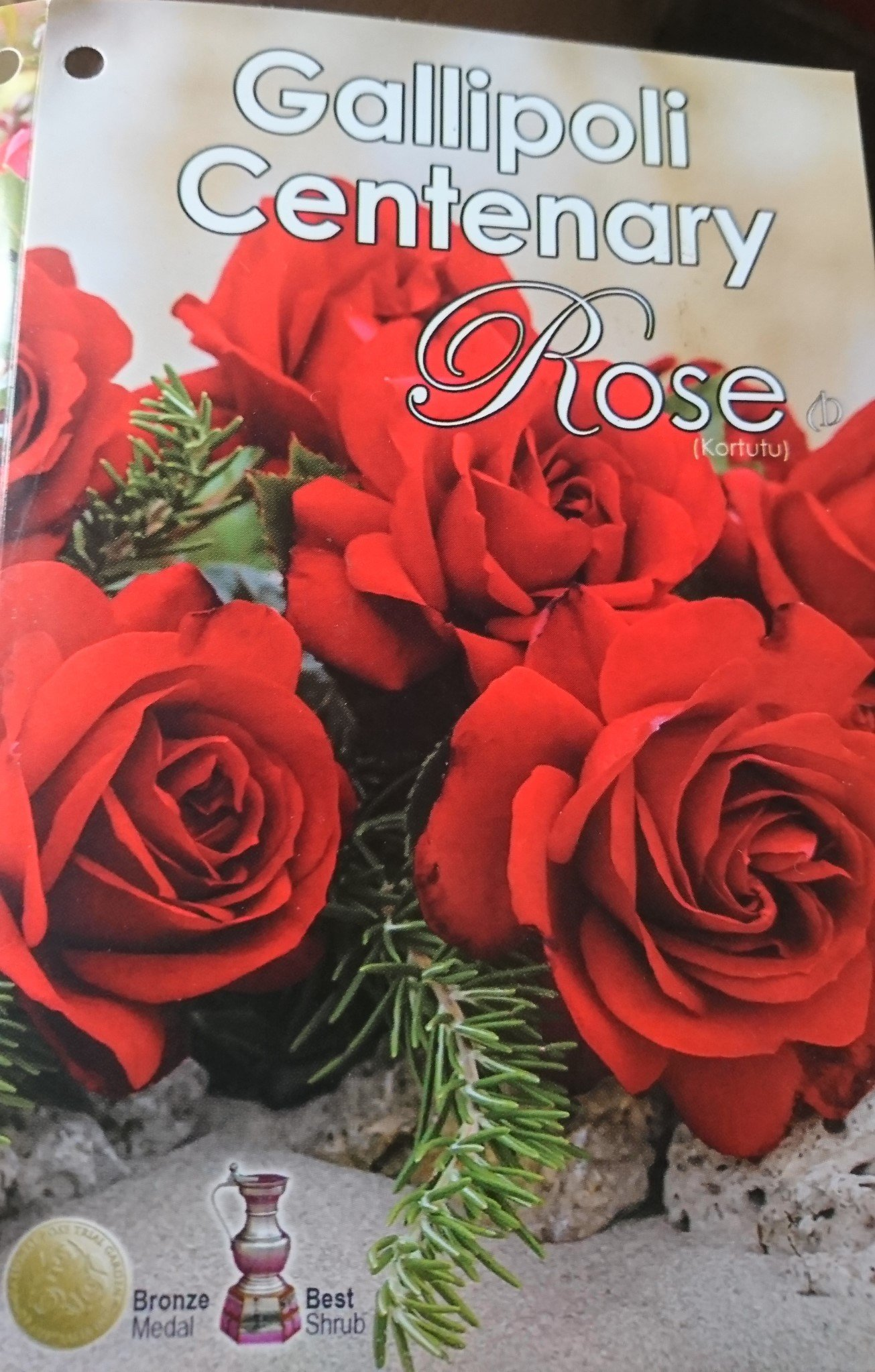 31 Gallipoli Centenary Rose 2018